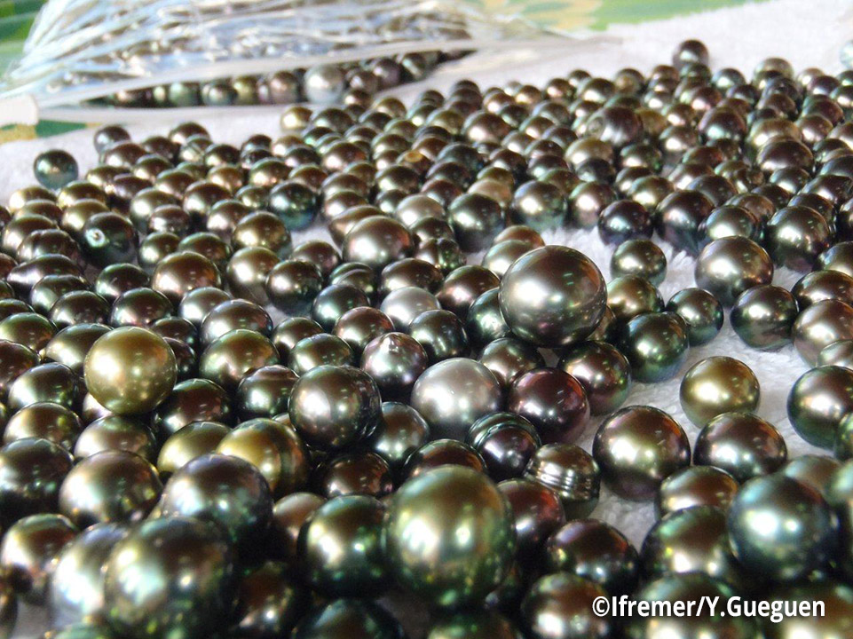 Perles-de-culture-de-Polynesie-francaise_catcher