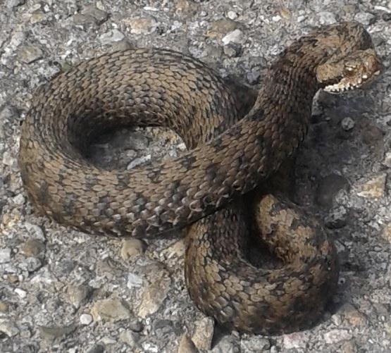 TIREUSE Serpent Guardz vert olive Taille s