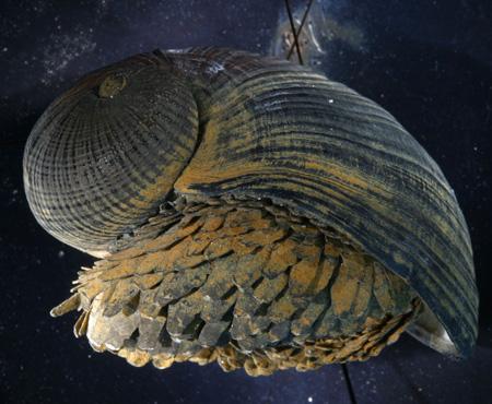 escargot_200110