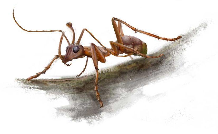 Dessin représentant une attitude de la fourmi-licorne vivante, telle qu'imaginée par les paléontologues