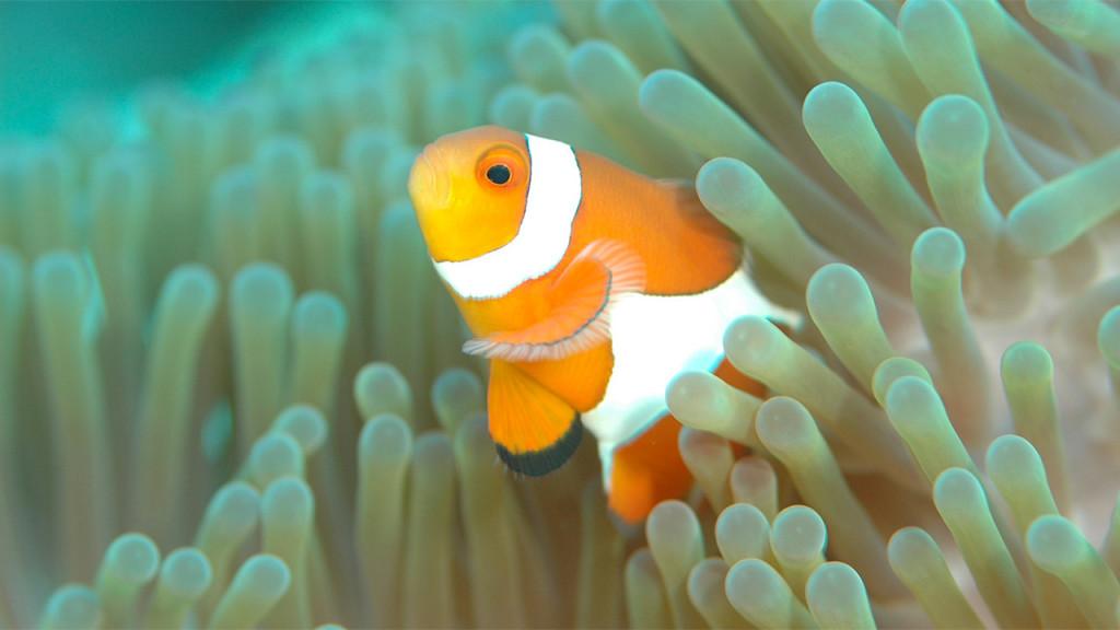 8 juin : journée mondiale de l'océan