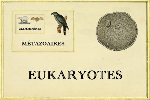 Cladistica, le Tinder de la phylogénétique - Eukaryotes