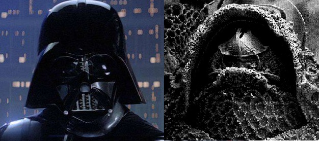 Darthvaderum