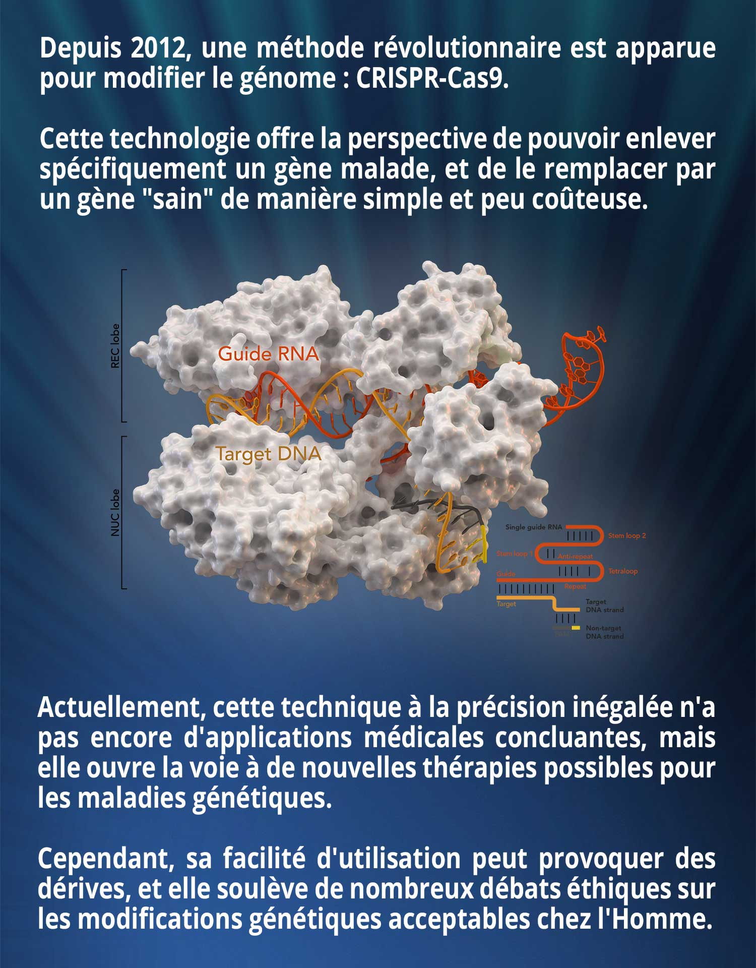 Depuis 2012, une méthode révolutionnaire est apparue pour modifier le génome : CRISPR-Cas9. Cette technologie offre la perspective de pouvoir enlever spécifiquement un gène malade, et de le remplacer par un gène