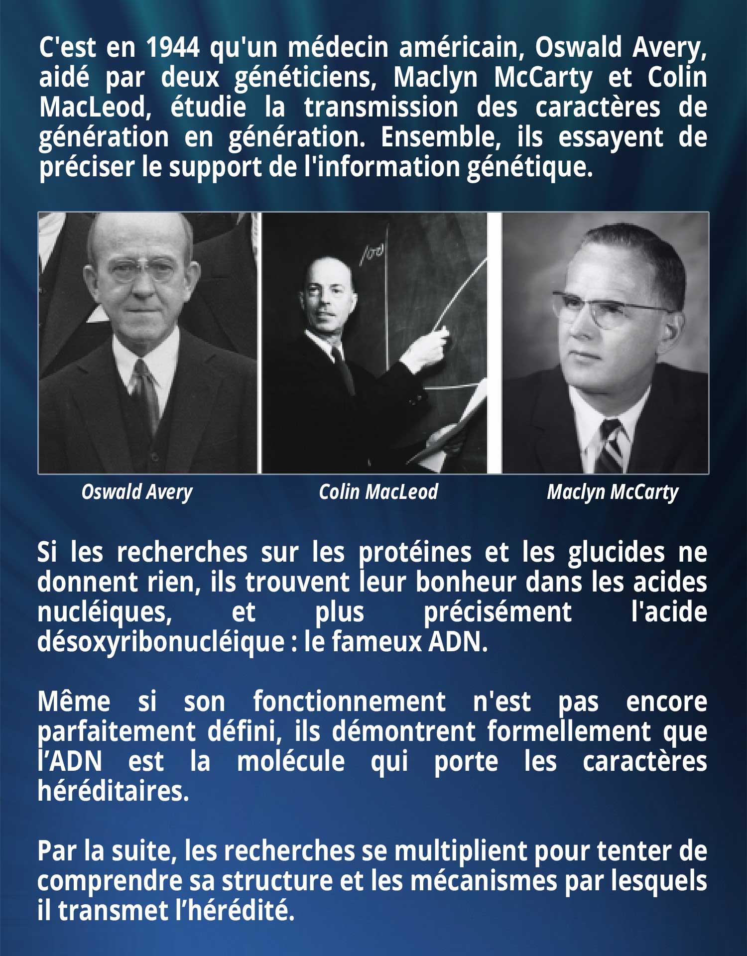 C'est en 1944 qu'un médecin américain, Oswald Avery, aidé par deux généticiens, Maclyn McCarty et Colin MacLeod, étudie la transmission des caractères de génération en génération. Ensemble, ils essayent de préciser le support de l'information génétique. Si les recherches sur les protéines et les glucides ne donnent rien, ils trouvent leur bonheur dans les acides nucléiques, et plus précisément l'acide désoxyribonucléique : le fameux ADN. Même si son fonctionnement n'est pas encore parfaitement défini, ils démontrent formellement que l'ADN est la molécule qui porte les caractères héréditaires. Par la suite, les recherches se multiplient pour tenter de comprendre sa structure et les mécanismes par lesquels il transmet l'hérédité.