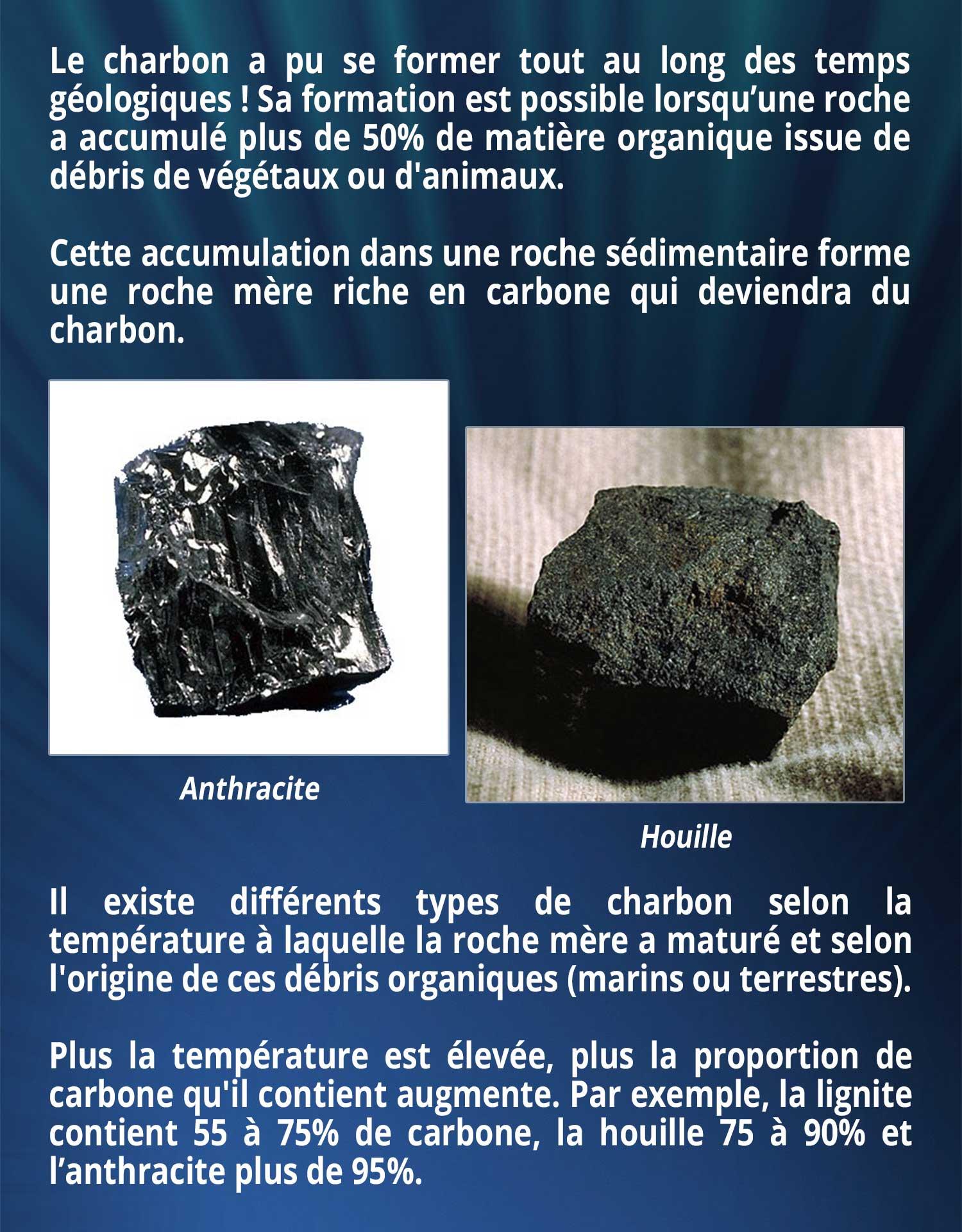 Le charbon a pu se former tout au long des temps géologiques ! Sa formation est possible lorsqu'une roche a accumulé plus de 50% de matière organique issue de débris de végétaux ou d'animaux. Cette accumulation dans une roche sédimentaire forme une roche mère riche en carbone qui deviendra du charbon ! Il existe différents types de charbon selon la température à laquelle la roche mère a maturé et selon l'origine de ces débris organiques (marins ou terrestres). Plus la température est élevée, plus la proportion de carbone qu'il contient augmente. Par exemple, la lignite contient 55 à 75% de carbone, la houille 75 à 90% et l'anthracite plus de 95%.